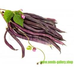 Graines Haricot Carminat A Cosse Violette