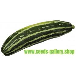 Sementes de Abobrinha MARROW LONG GREEN BUSH