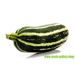 Marrow Long Green Bush Courgette Seeds