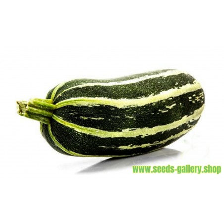 Zucchini Samen MARROW LONG GREEN BUSH