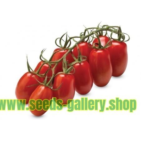 Sementes de Tomate MARZANINETTO - MINI SAN MARZANO
