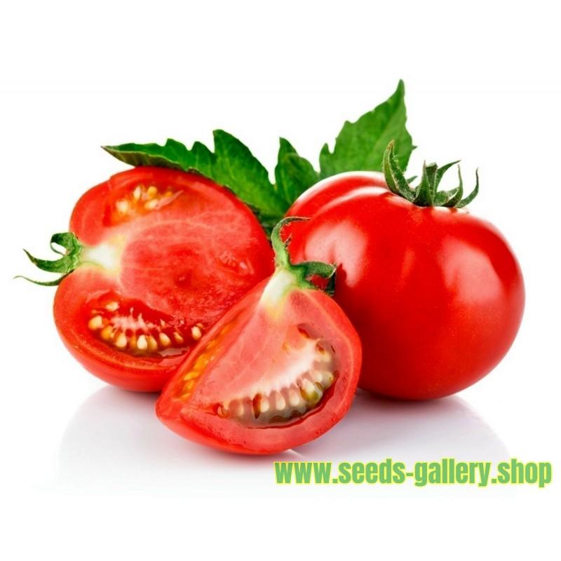 Tomat Moneymaker ekologiskt frö
