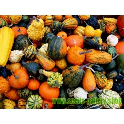 Ornamental squash mix seeds