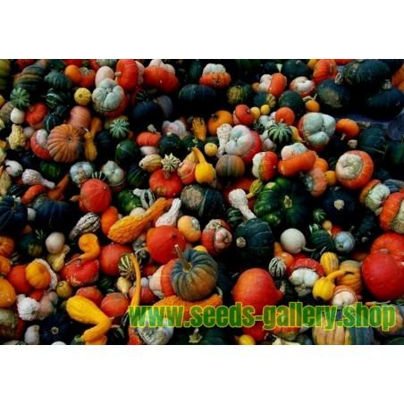 Sementes Mix Mini Abóboras Decorativas