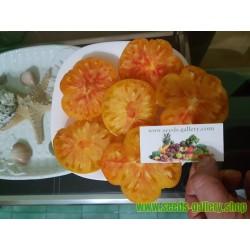 Semi di pomodoro ANANAS - PINEAPPLE