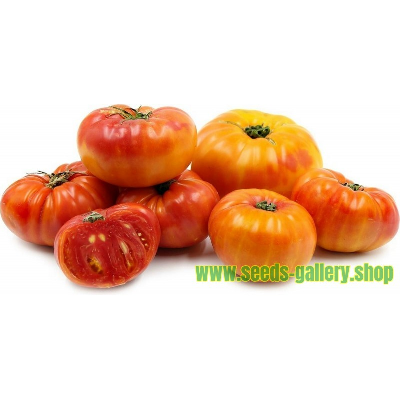 PINEAPPLE Beefsteak Tomato Seeds