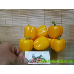 QUADRATO D'ASTI GIALLO Sweet Pepper Seeds
