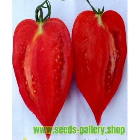 Rare Tomato ANDINE CORNUE Heirloom Organic Seeds