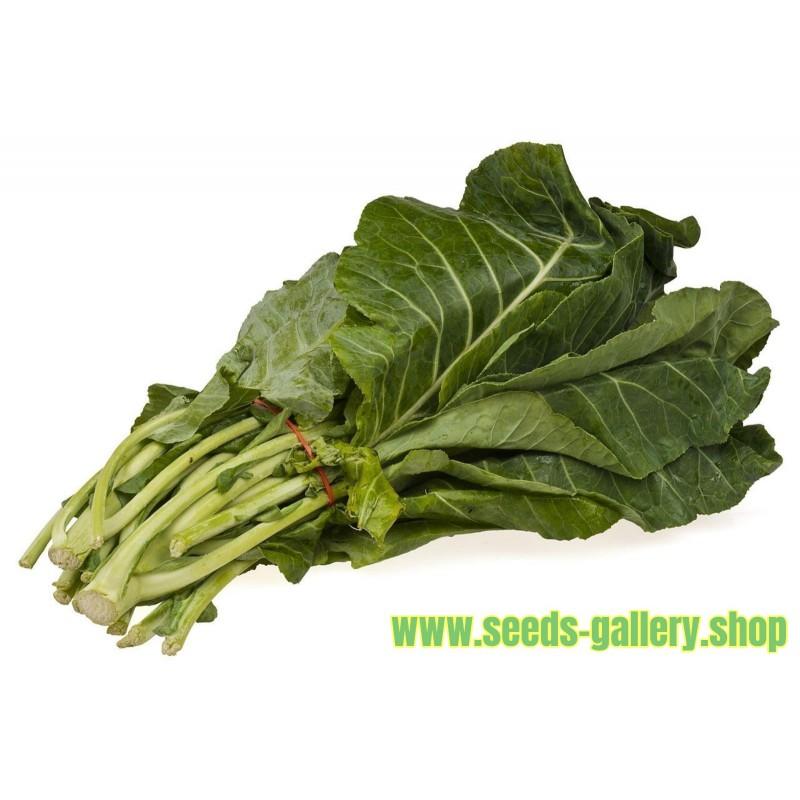 Rastan Seme - Cudotvorna biljka