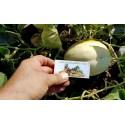 SNOW LEOPARD Melon Seeds - VERY RARE