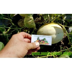 SNOW LEOPARD Melon Seeds - VERY RARE