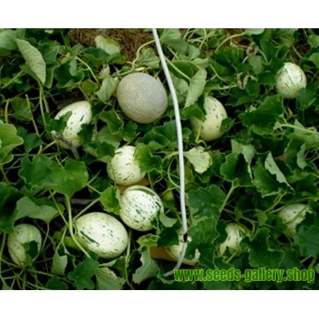 SNOW LEOPARD Melon frön - MYCKET SÄLLSYNTA