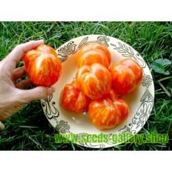 Graines de Tomate STRIPED STUFFER