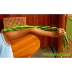 Σπόροι Φασόλι Yardlong