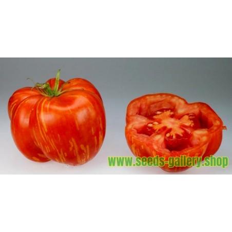 Tomat frön STRIPED STUFFER