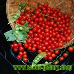 Semillas de tomate SWEET PEA GROSELLA