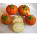 TURKISH ORANGE Aubergine Finest Seeds