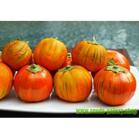 TURKISH ORANGE Aubergine Finest Seeds
