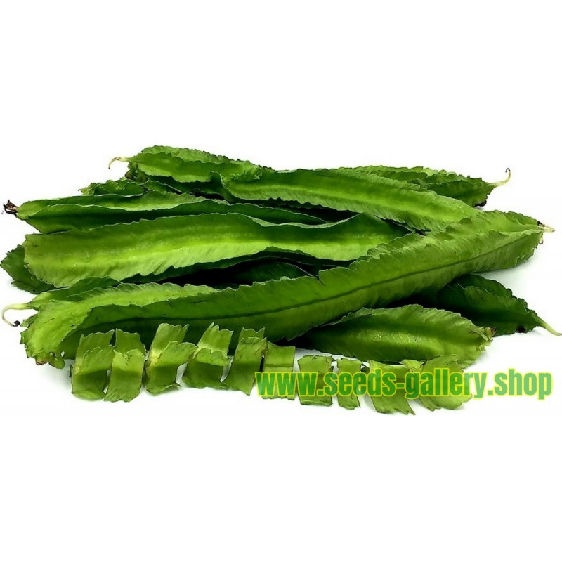 WINGED BEAN Seeds