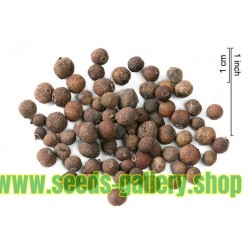 Sementes de pimenta (Pimenta dioica)