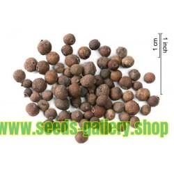 Semi di Pepe giamaicano (Pimenta dioica)
