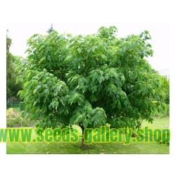 Pappersmullbärsträd Frön