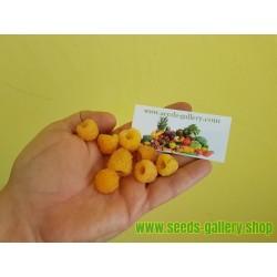 Cisti 98% kapsaicin 12.500.000 SHU - 1 gram