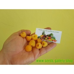 Yellow Raspberry Seeds Tasty Fruit