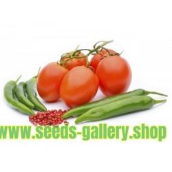 Hur sådd och odling tomat och chili