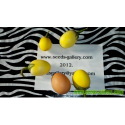 Golden Eggs Seeds