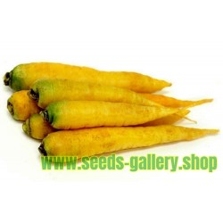 Semillas (14000 semillas) De Zanahoria Solar Amarillas