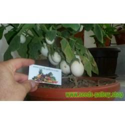 Σπόροι Solanum melongena Golden Eggs