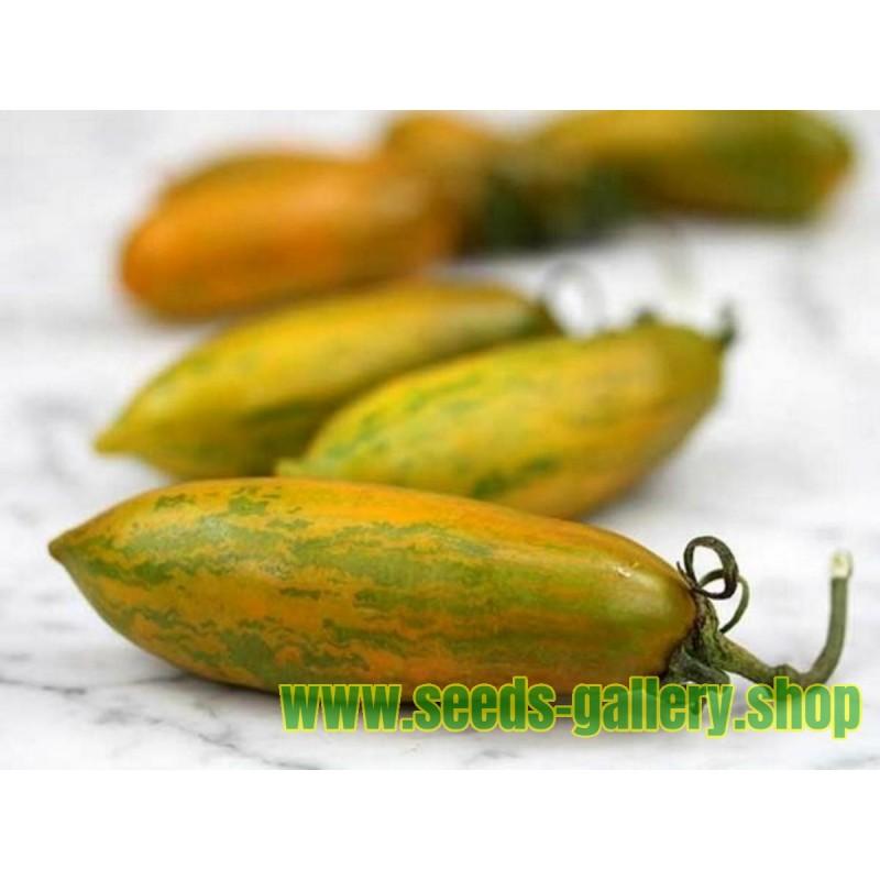 Green Sausage Tomato Seeds