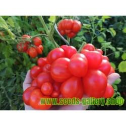 Semillas de tomate VOYAGE