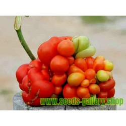 VOYAGE Tomato Seeds - Heirloom Variety