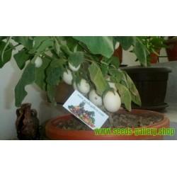 """Påskäggplanta Solanum Molengina Frön """"Golden Eggs"""""""