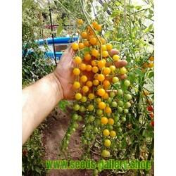 Semillas de Tomate Grosella Amarillo