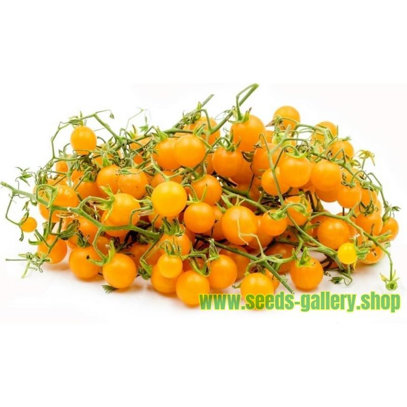 Graines de Tomate Groseille Jaune