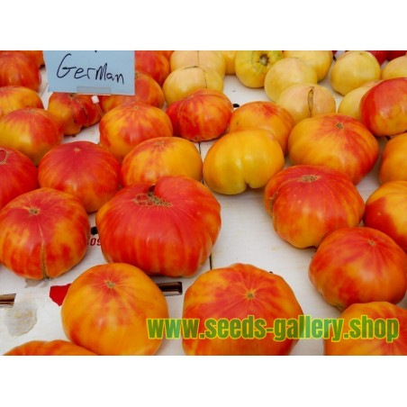 Sementes de Tomate OLD GERMAN