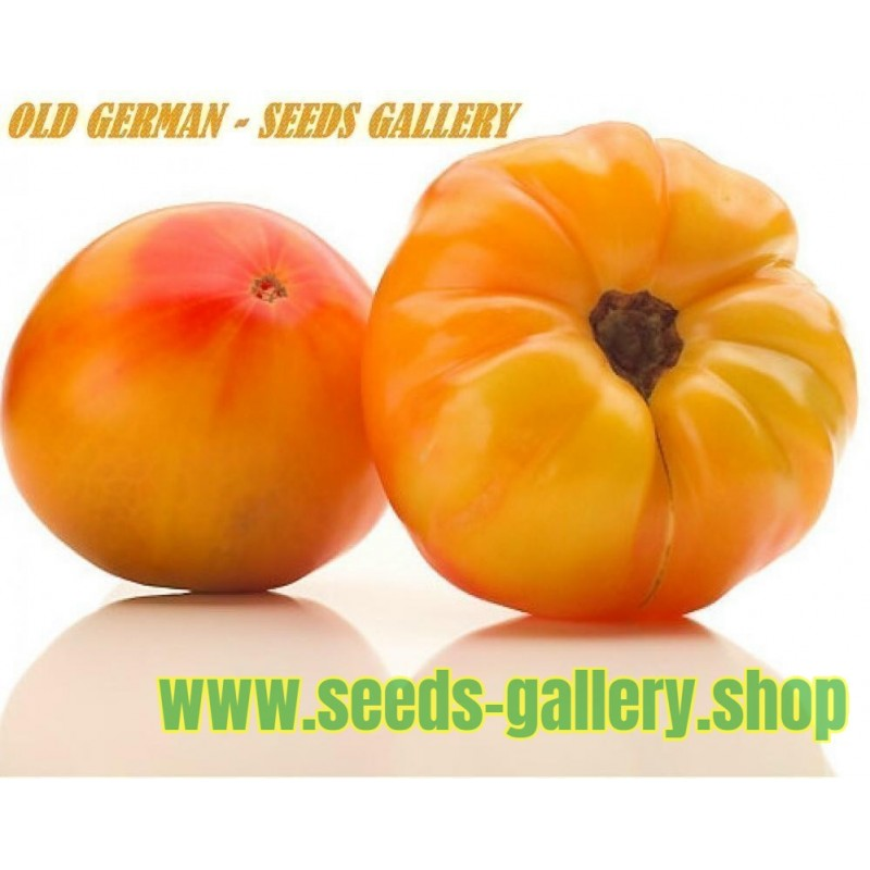 OLD GERMAN Organic Tomato Seeds