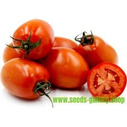 Tomatfrön ROMA NANO