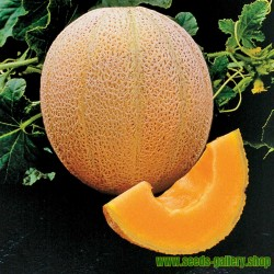 Sockermelon frö HALES BEST JUMBO