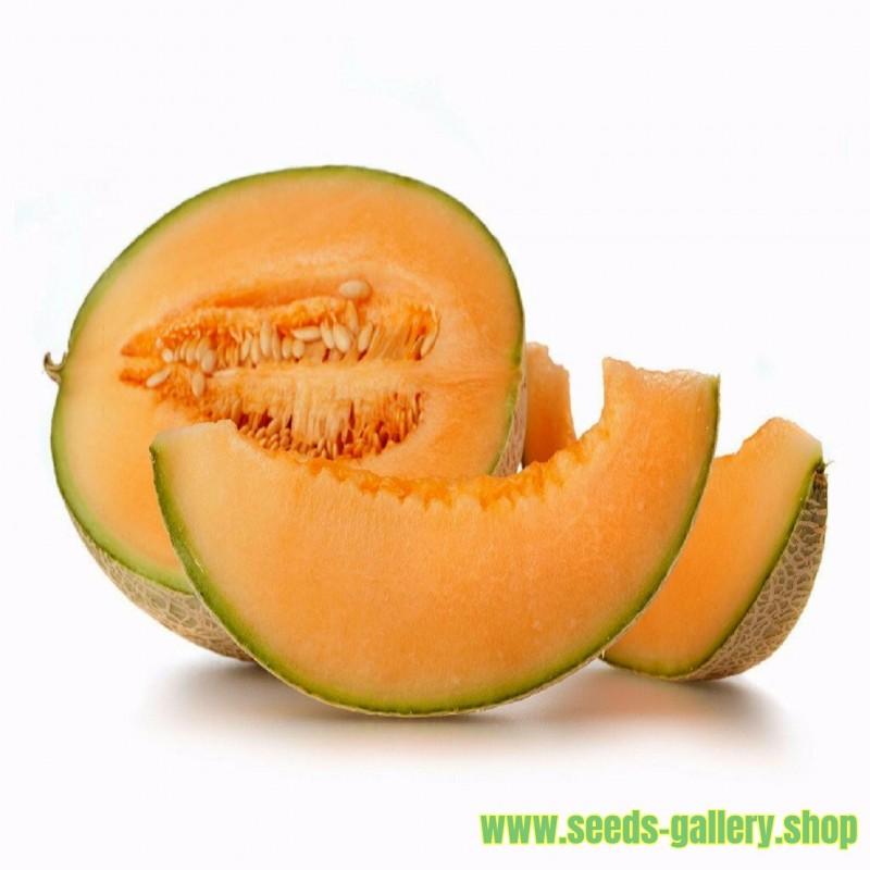 Semillas de melón HALES BEST JUMBO