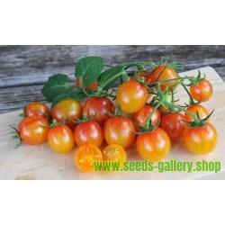 ARTISAN GOLDEN BUMBLE BEE Cherry Tomato Seeds