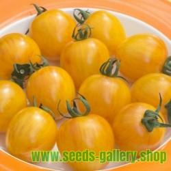 Graines de Tomate ARTISAN GOLDEN BUMBLE BEE