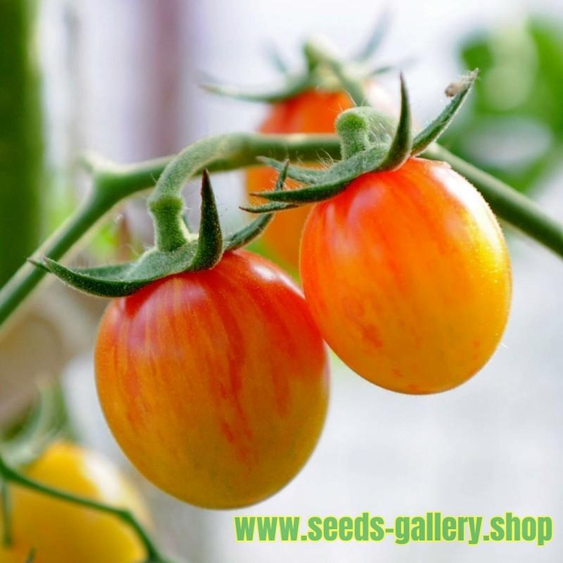 Semillas de tomate ARTISAN GOLDEN BUMBLE BEE