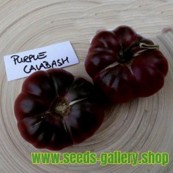 Purple Calabash, Aztec heirloom tomato seeds
