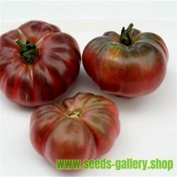 Tomat frön PURPLE CALABASH