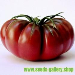 Purple Calabash, Aztec heirloom tomato seeds