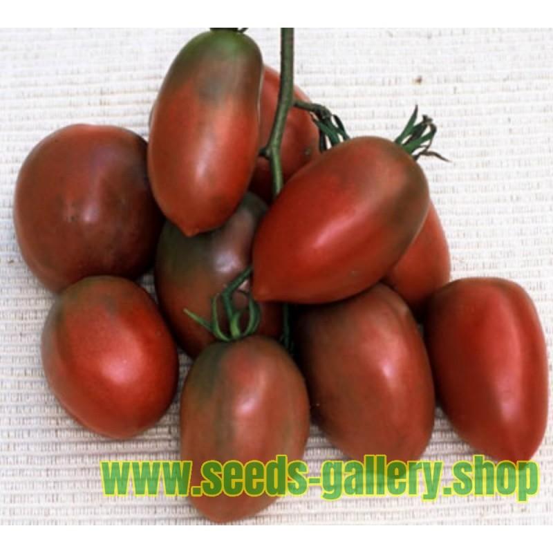 Tomaten Samen PURPLE RUSSIAN - UKRAINIAN PURPLE